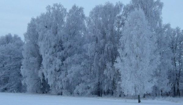 schnee Frohe Weihnachten