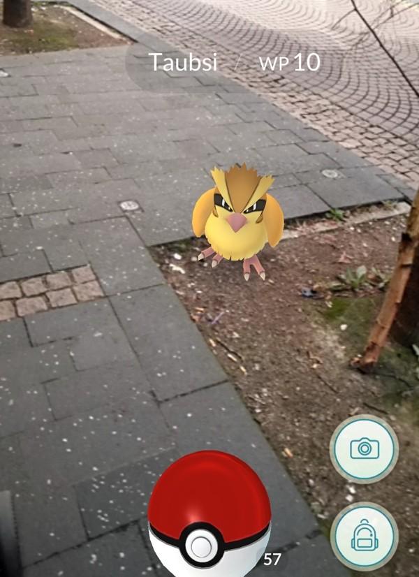 Taubsi auf der Straße